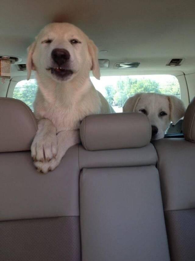 Autofahren mit Hunden