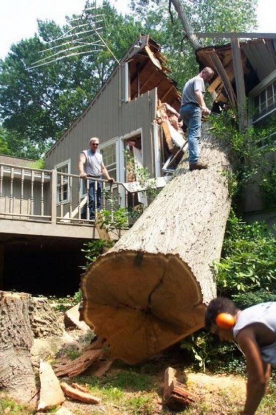 Baum vs. Haus