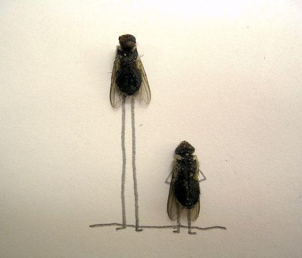 Fun mit toten Fliegen