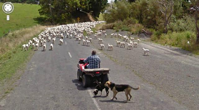 Google Street View - Tierfotos