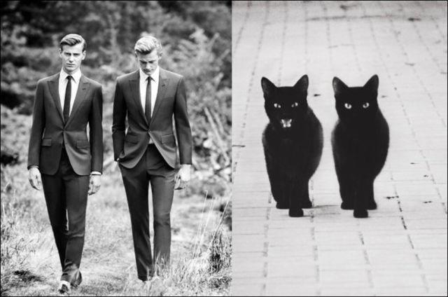 Katzen - Mimik