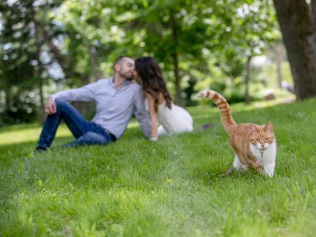 Katzen - Photobomben