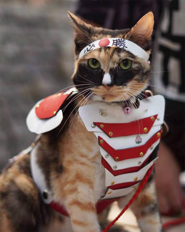 Katzen in Kampfrüstungen