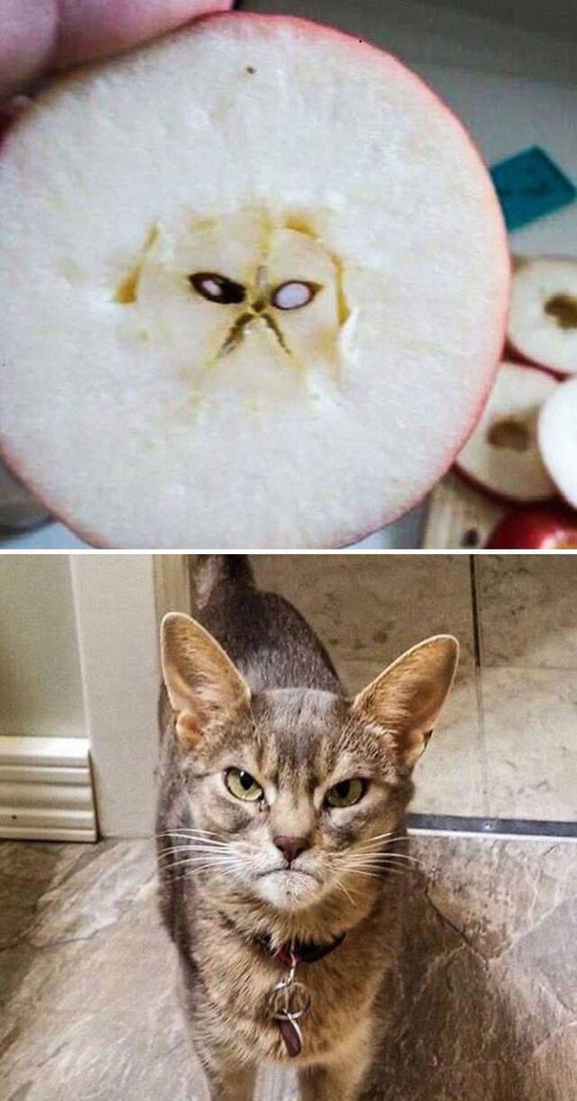 Katzen, überall Katzen!