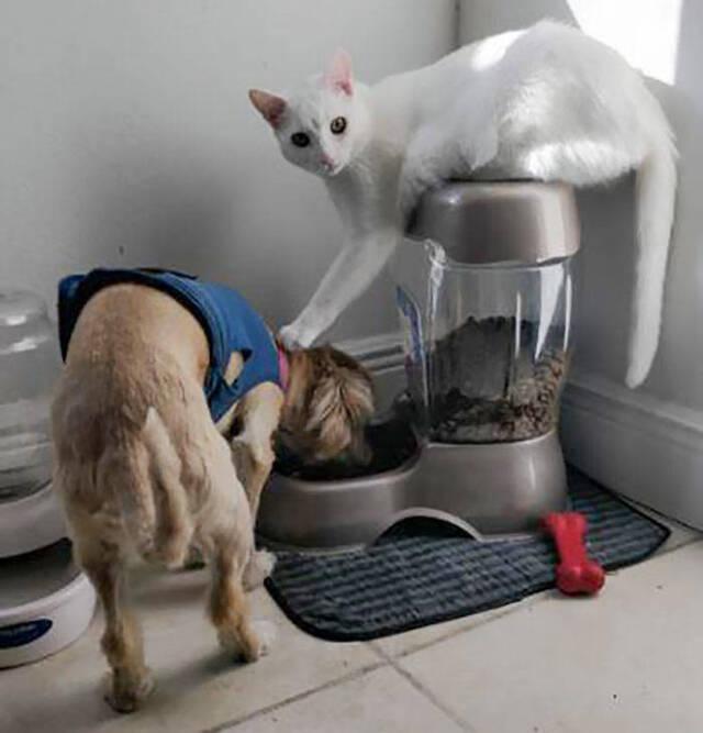Katzen vs. Hunde