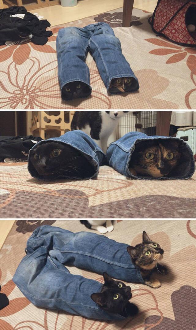 Katzenleben #4