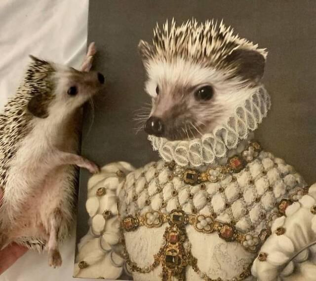 majestätische Tierportraits