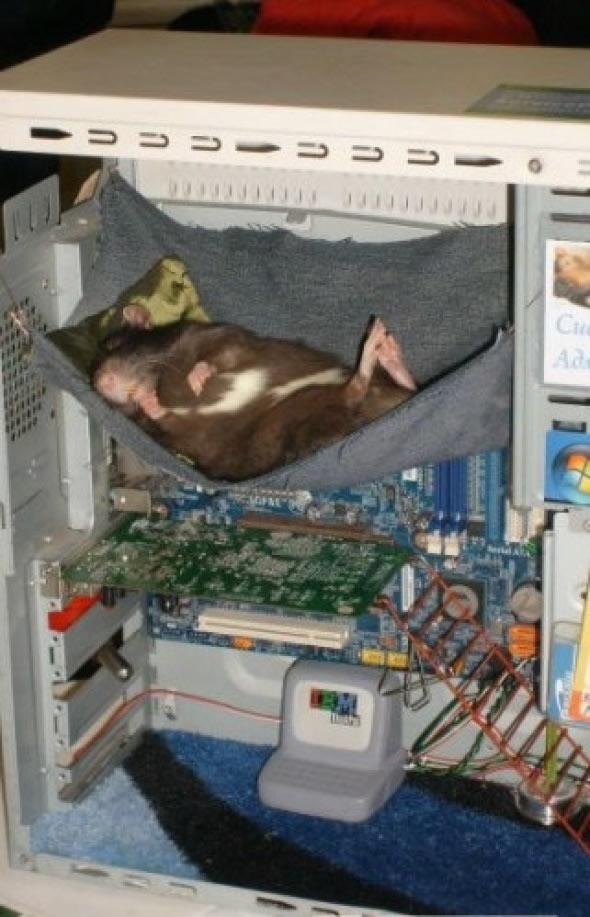 Bildschirmarbeiter - Picdump 27.03.2009