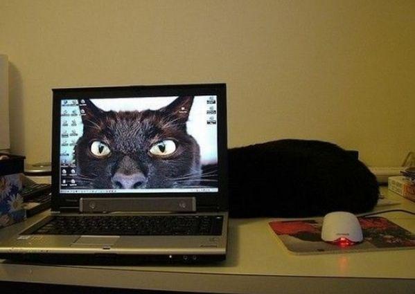 Bildschirmarbeiter - Picdump 14.08.2009