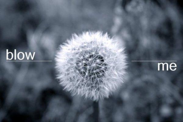 Bildschirmarbeiter - Picdump 11.06.2010