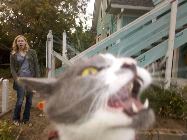 Bildschirmarbeiter - Picdump 14.10.2011