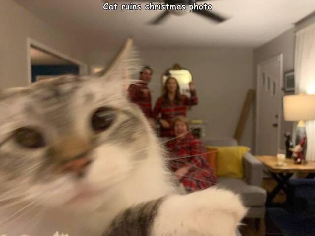 Bildschirmarbeiter - Picdump KW01 2021