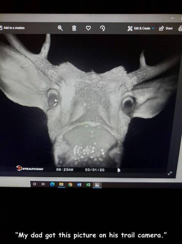 Bildschirmarbeiter - Picdump KW41 2020