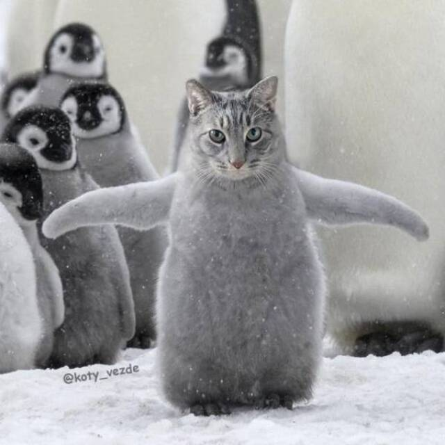 Willkommen im Katzenuniversum