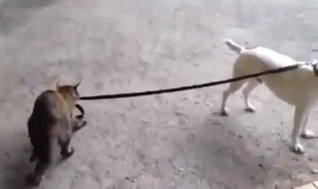 Kommunikation zwischen Katze & Hund - GELIEBTE KATZE